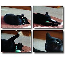 Kitty Collage Photographic Print