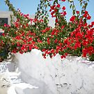 Spring In Santorini by Mary Grekos