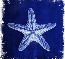 rustic shabby chic nautical navy blue starfish beach by lfang77