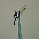 Dragonfly #1 by iamelmana