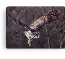 Dark Side Of  The Woods/ Great Gray Owl Canvas Print