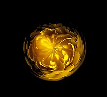 Yellow flower orb on black by Robert Gipson