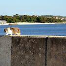 STRAY CAT by niki78