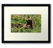 Bear Kicking Back Framed Print