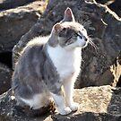 STRAY CAT SOAKING UP RAYS by niki78