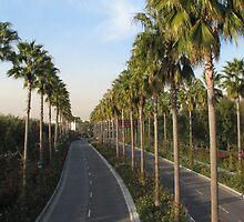 Palms Along Disney Way by TLCGraphics