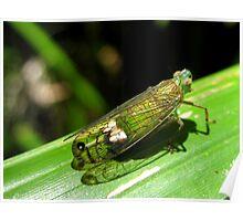 Green Leafhopper Poster