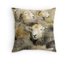 Herd of Herdwicks Throw Pillow