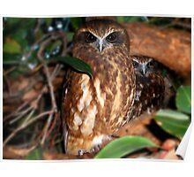 Boobook Owls Poster