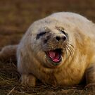 What's so funny?! by HelenBeresford
