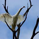 Yellowbill Spoonbill # 2 by Murray Wills