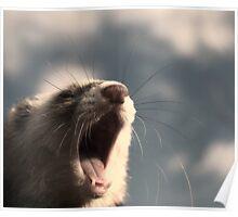 Dramatic Ferret Poster