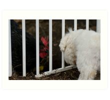 Lucy (maltese) Vs Lucy (chook) Art Print
