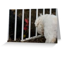 Lucy (maltese) Vs Lucy (chook) Greeting Card
