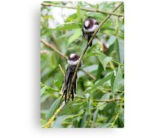 Two little birdies sitting on a branch Canvas Print