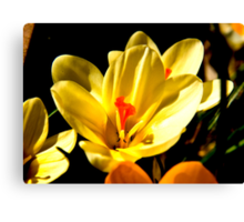 Spring Flowers #2 Canvas Print