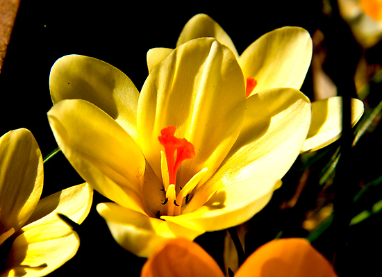 Spring Flowers #2 by Trevor Kersley
