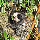 """Pygmy Marmoset"" ( Endangered ) by mrcoradour"