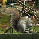 Squirrel .... Another Daily Visitor !!! by AnnDixon