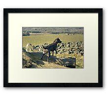 The Irish Rover Framed Print