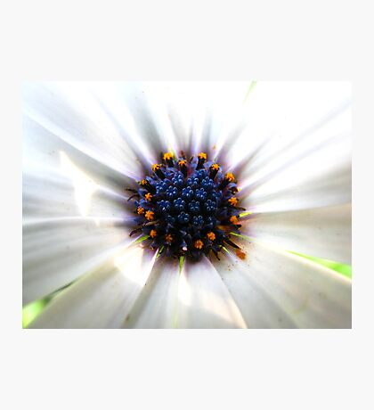 Flowers in Flower Photographic Print