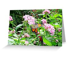 FLUTTERS AND FLIES Greeting Card