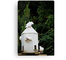 Cott community Canvas Print