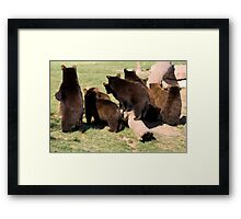 Bear cub behinds Framed Print
