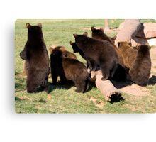 Bear cub behinds Canvas Print