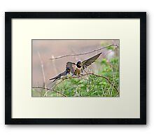 Feed me now Framed Print