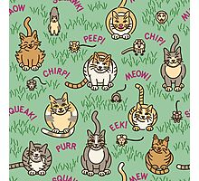 Cats and Critters Photographic Print