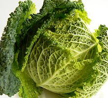 Savoy Cabbage by CatSalterPhoto