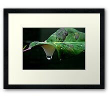 Cookoo Spit and Raindrop Framed Print