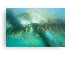 Kelp Metal Print