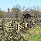 Fences and Prickly Pears by Susan Russell