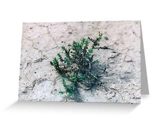 Surviving...in harsh conditions...  Greeting Card