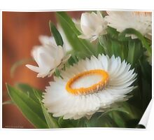 Helichrysum Poster