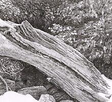 Becoming Driftwood - MacWorth Island, Maine by jossie4682