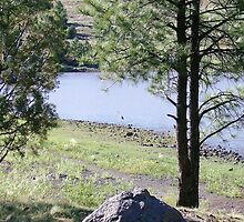 Egret, Kaibab lake by prettymeadow