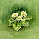 a glimpse of spring in the clearing by Maureen Sparling