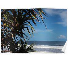 Pandanus Palm Poster