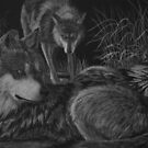 Before the Hunt - Mexican Wolves by Heather Ward