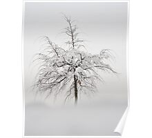 Winter Tree Poster
