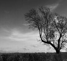 Cambridgeshire Tree by Nick Bland