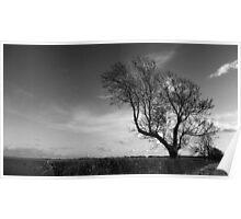 Cambridgeshire Tree Poster