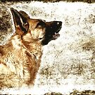 The Dog Speaks by AngieM