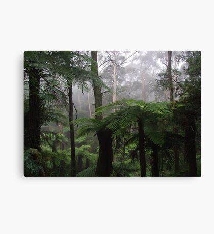 Leura mist Canvas Print