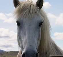 Garron Horse Portrait by M.S. Photography/Art