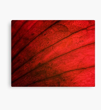 Beauty can be all over III Canvas Print