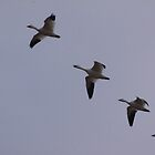 Flying Geese by elisab